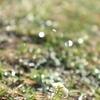 11月のカノープスと、新入りの花たち