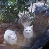 野良子猫を保護しました