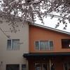 【お花見のできるカフェ】「ほっとカフェ桜の木さん」で鳥屋野潟の桜を満喫しました。