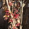庭の茶花と春の和菓子