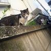 立春の庭と猫