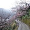 梅さんぽ 奈良県その3(賀名生梅林とイチゴ狩り)