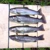 渓魚を育む山河に対して畏敬の念を次世代につなぐ