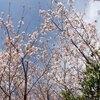 【カミナリハムシ】【しゃくとりむし】【ヨコヅナサシガメ】桜と安部公房
