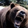 キャンプで熊に会う?生存率で見る万が一の対処法