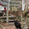 猫神社 田代島