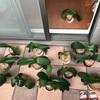 胡蝶蘭の成長日記 いろいろ変化が出てきました!