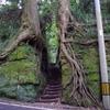 GoTo伊豆大島の旅(2)