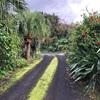 八丈島で観察した動植物(低地編)