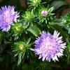 バラ以外の植物