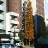 都会の街角 に 孤高の大木