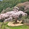 桜の花を追って、小田原・身延を訪ねる旅
