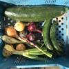 お野菜販売します