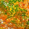 染まりゆく秋の情景に思いを馳せる 〜紅葉のメカニズム〜