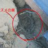 瓦の下に雀の巣