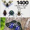 おすすめの虫図鑑。1500種以上の虫を識別した僕が紹介!