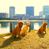 I TAKE A WALK DAIBA