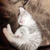 【猫写真多め】我が家の猫のかわいい仕草、姿まとめ