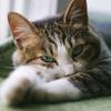 猫が何もない所を前足でカキカキしているのは何で?