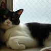 今日の黒猫モモ&白黒猫ナナの動画ー782