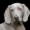 それは限られた時間を刻むこと ~愛犬の闘病、もう一つの側面(1/4)~
