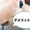 うさぎを飼うデメリットがネットで多いことについてリアル飼い主が簡単に解説!