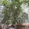 【妊婦旅-京都⑤】とりあえずここだけ抑えとけ!の嵐山さらっと観光ルート