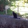 そして再び猫屋敷