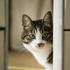 猫をなでていたら急に攻撃してくるのは何で?