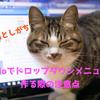 ノーコード開発プラットホームAdaloでドロップダウンメニューを作る時の注意点