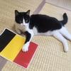【エムPの昨日夢叶(ゆめかな)】第865回 『日本贔屓なのか!?予想ネコ・レフくんが、ベルギー戦、日本快勝を予想した夢叶なのだ!?』[7月1日]