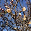 冬の土用を過ぎて…そして春へ