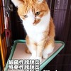 我が家の猫達(にゃんず)の尿採取(おしっこ採り方)図解