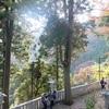 初めての大山詣りへ。豊かな自然と大山阿夫利神社でパワーチャージする旅【前編】