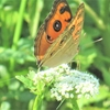 【写真】湿地帯を散歩&散策 今日は蝶の日???