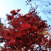 紅葉の写真。