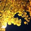 秋の夜の公園散歩もなかなかよいですよ。(*'∀')