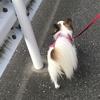 愛犬パピヨンとランチ