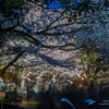 栗林公園 春のライトアップ 2021.3.27