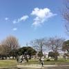 明日見に行く? 川崎駅近郊自転車で行きたい桜開花情報 2