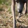 【犬の手作りごはん】白米・玄米・発芽玄米の違いや栄養素。
