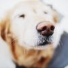 【実態調査】愛犬家の悩みと解決法 ~老犬の闘病・介護、飼い主の声(2/2)~【アンケートまとめ】