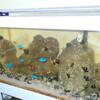 海水魚水槽水換え