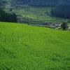 乙大木谷の棚田 ~山肌に連なる昔ながらの田園風景~
