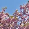 春の草花たち&アサヒナカワトンボ、ツマキチョウ他&タゴガエル激写♪