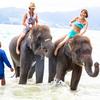 象さんと海水浴、エレファントスイムツアーで思い出がいっぱい!