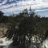 オリーブ摘み、初体験