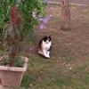 今日の帰りにて。置物みたいな猫ちゃん。(*´﹃`*)