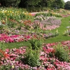 花と冒険が楽しめるよこはまフェス期間中の里山ガーデン