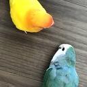 愛鳥2羽と愛主人との下町生活